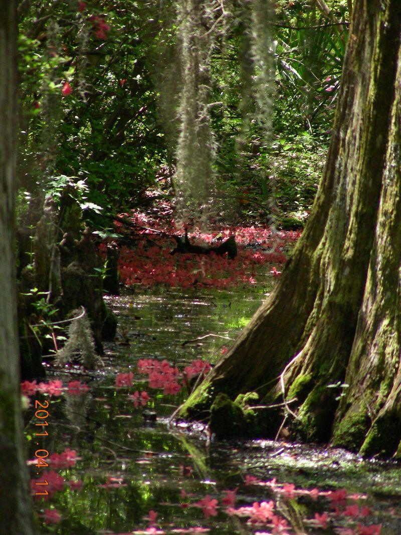 Charleston Magnolia plantation quilt 063